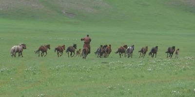 Voyage en Mongolie, juillet 2018